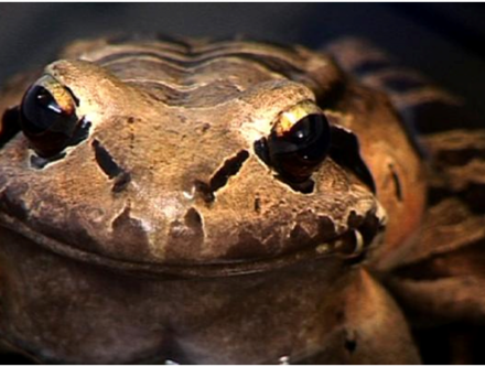 dating-agency-for-frogs